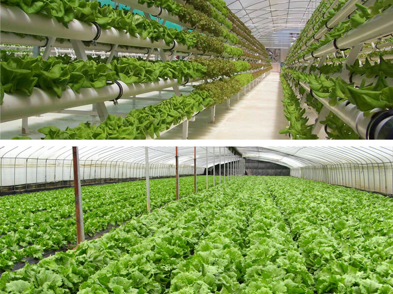 גידול הידרו לעומת גידול באדמה - מה יותר טוב?