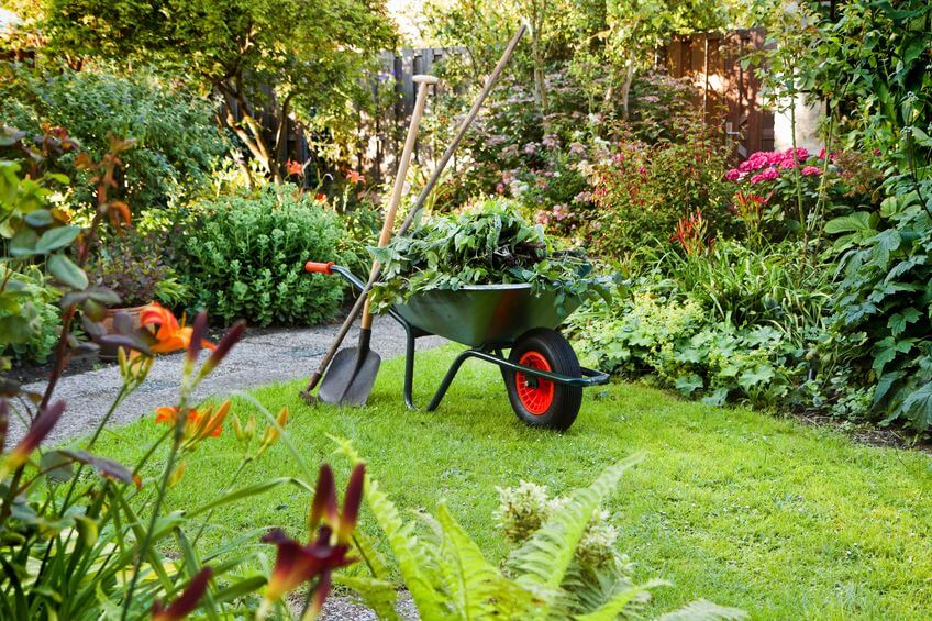 תחזוקת גינה לקראת הקיץ מריצה בגינה עמוסה ענפים