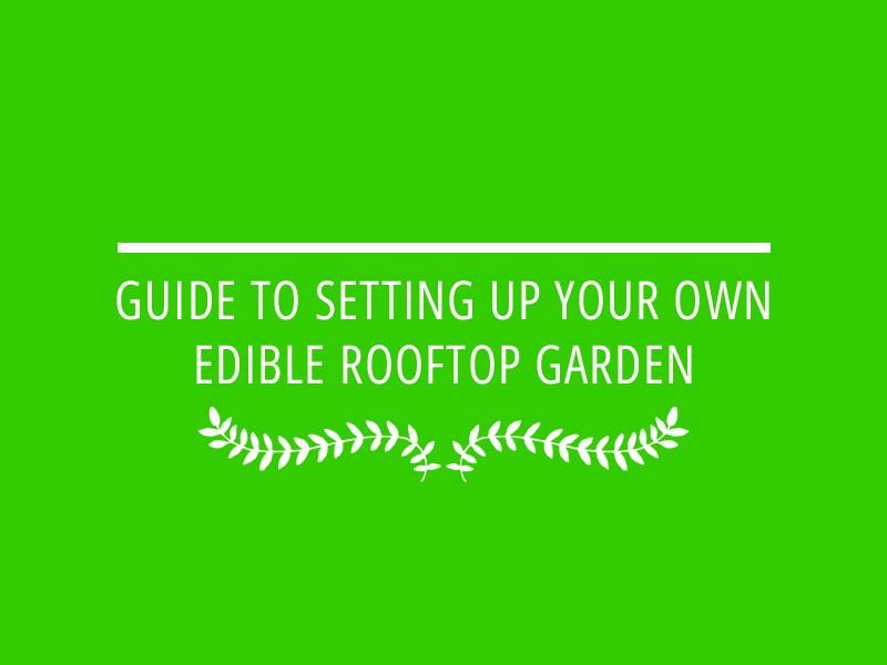מדריך להקמת גינת גג אכילה , הקמת גינת ירק על הגג