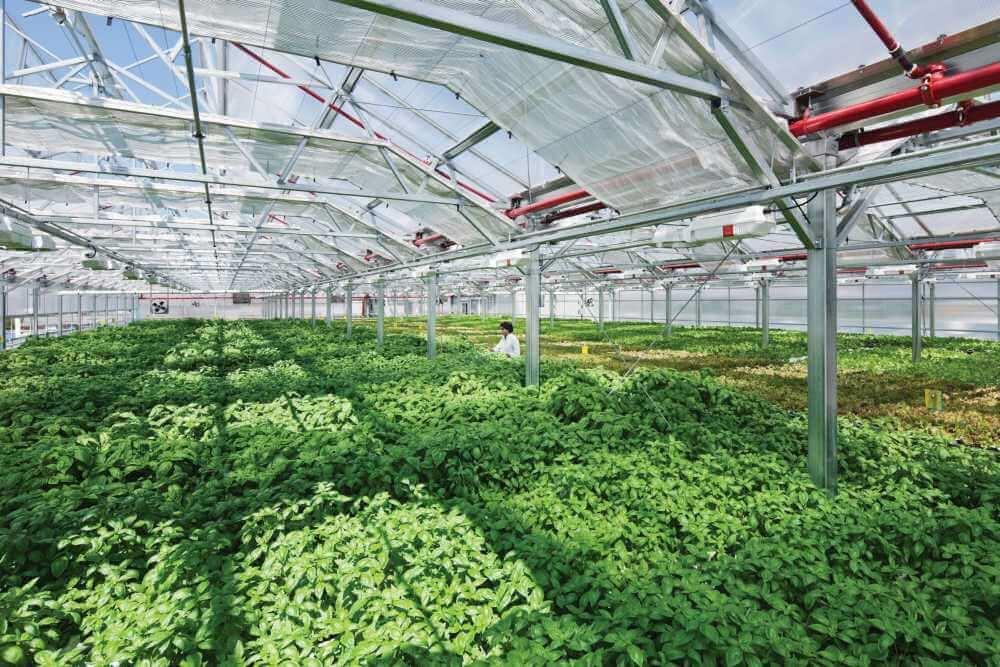 Sky Greens חווה אנכית בסינגפור 2
