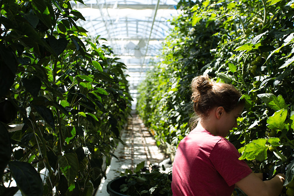 Lufa Farms חממות גידול הידרופוניות במונטריאול, קנדה 2