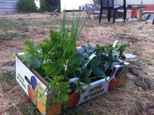 שתילי מלפפון אבטיח עירית ועוד להקמת גינת ירק ביתית בחצי שעה