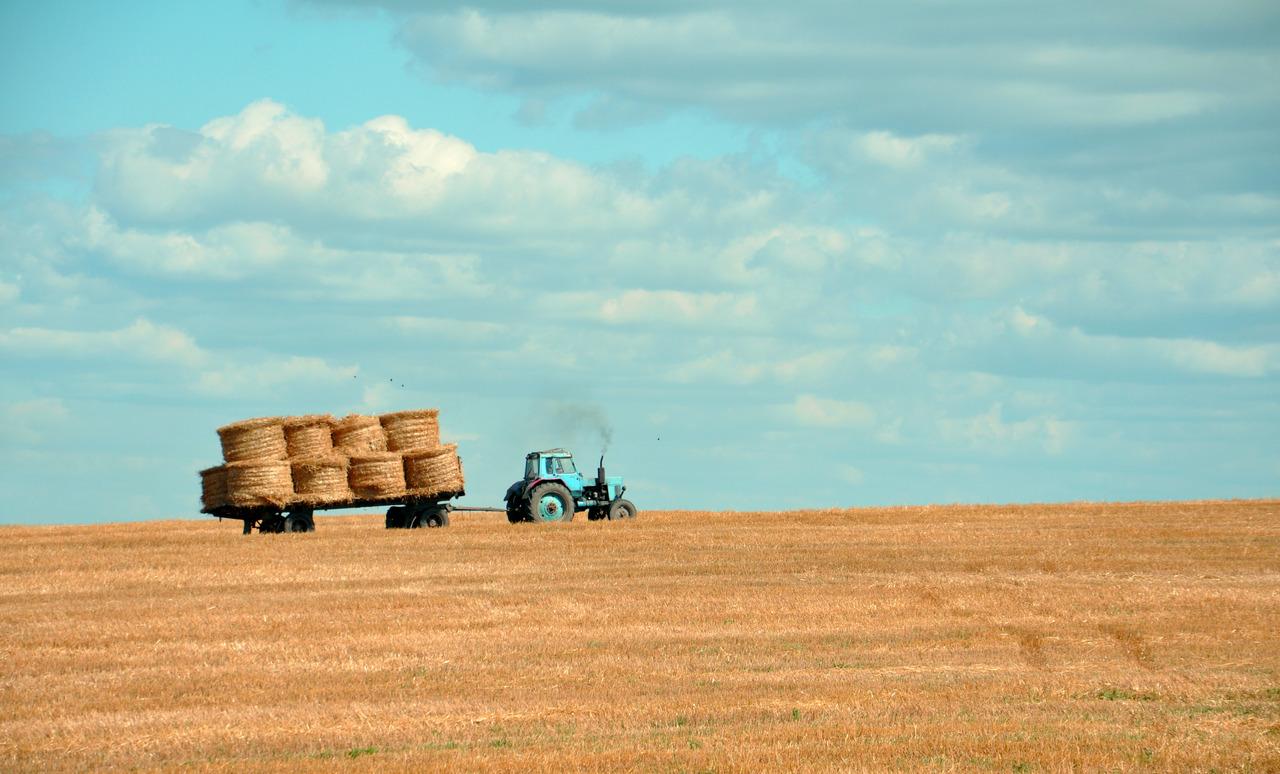 גידול מזון בשנת 2050 חקלאות העתיד