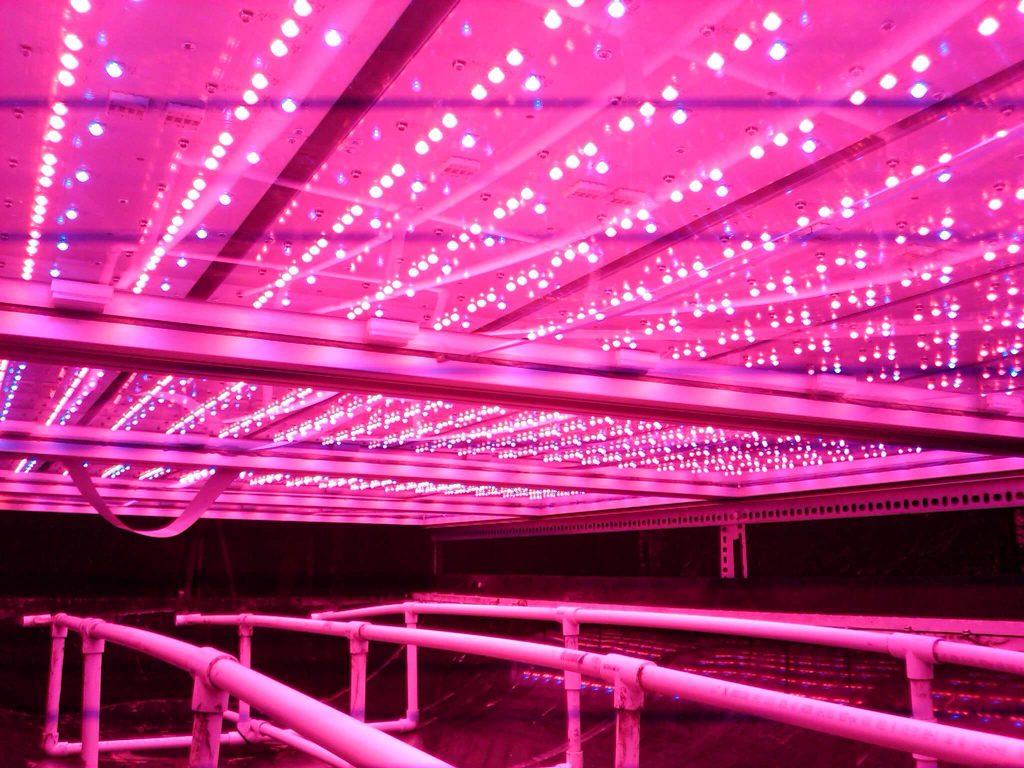 בכל הנוגע לחדשנות ויעילות במנורות הגידול, החברה משתמשת בטכנולוגיית LED וממקדת את ספקטרום התאורה לאורכי גל המתאימים ביותר לתהליך הפוטוסינטזה של הצמחים, ובכך מייעלת את התהליך וצורכת פחות אנרגיה. כמו כן עקב חוסר ההתחממות של מנורות הלד, ניתן למקמן קרוב יותר לצמחים, ובכל להגביר עוד יותר את התפוקה למטר מרובע.
