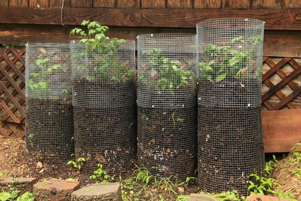 תפוחי אדמה תחומים ברשת גינון ביתי