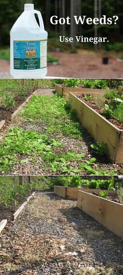 הסרת עשבים בגינה