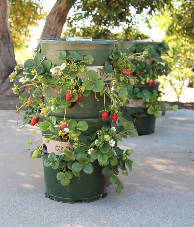 איך להכין מגדל תותים בעצמי