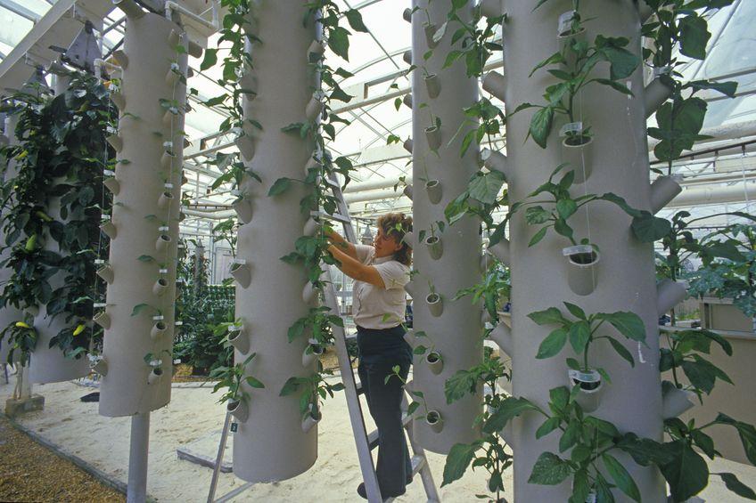 גידול לגובה בהידרופוניקה בחקלאות עירונית
