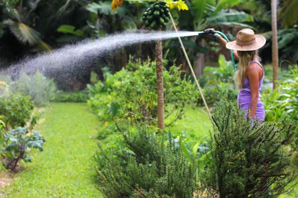 האלמנטים לגידול ירקות בבית