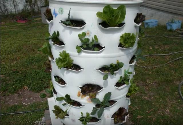 מילוי החבית בצמחים