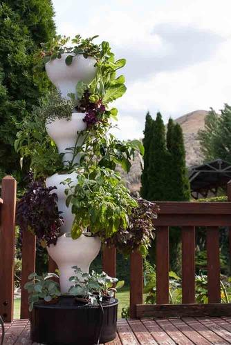 גידול ירקות בבית עם מערכת הידרופונית משוכללת
