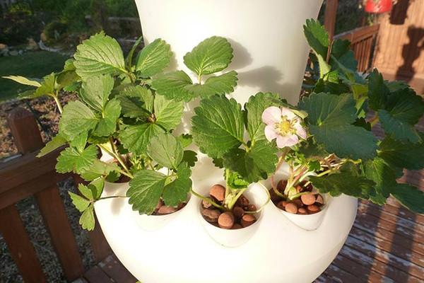 מערכת גידול עציץ הידרופוני למרפסת לגג לגינה לפטיו לחממה