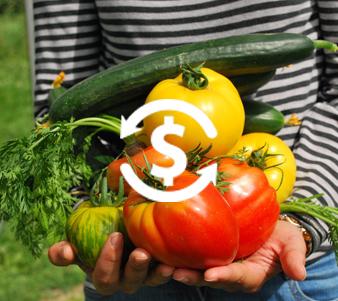 גינה ביתית השקעה כלכלית חכמה