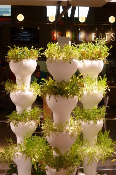 מערכות גידול הידרופונית 56 צמחים