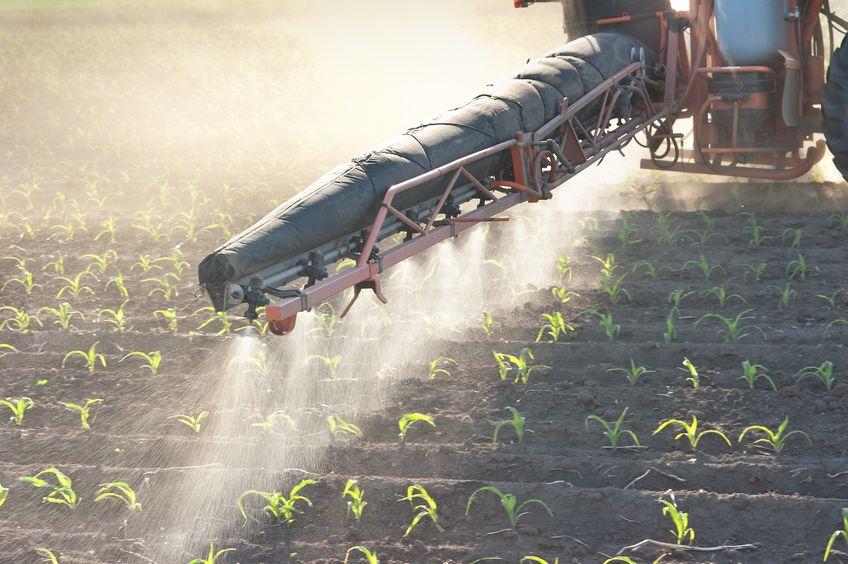 דישון הקרקע בחקלאות המסורתית מוביל להצטברות מלחים וחילחולם למי התהום
