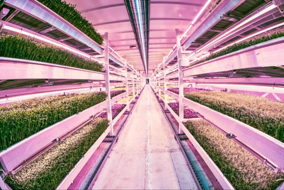 Growing Underground - חקלאות הידרופונית מתחת לאדמה