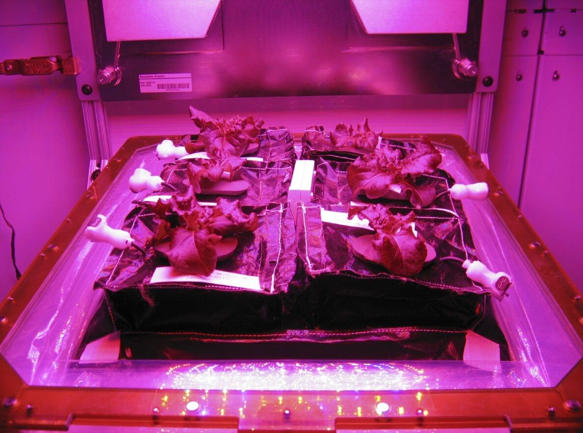 גידול חסה הידרופונית בחלל