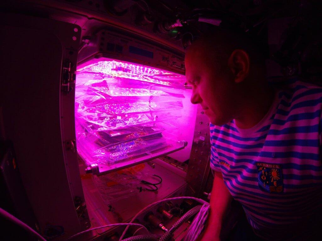 גידולים הידרופוניים בחלל - NASA