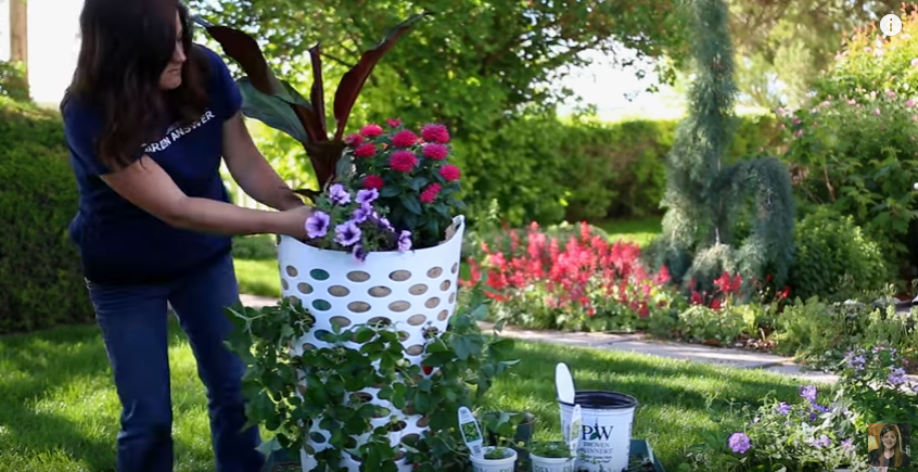 רעיונות לגינה תותים