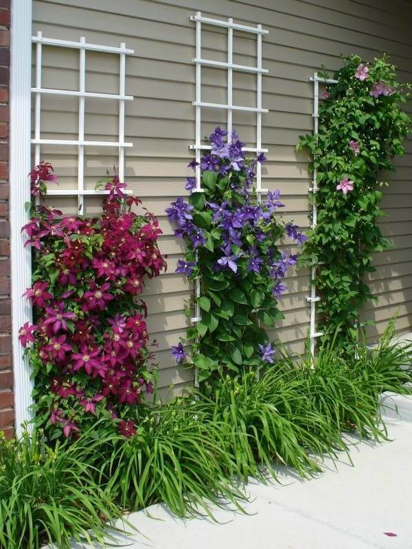 עיצוב גינות עם פרחים רב עונתיים מטפסים
