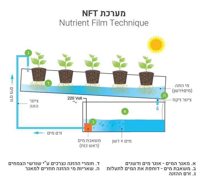 מערכת הידרו NFT מדריך תחזוקה