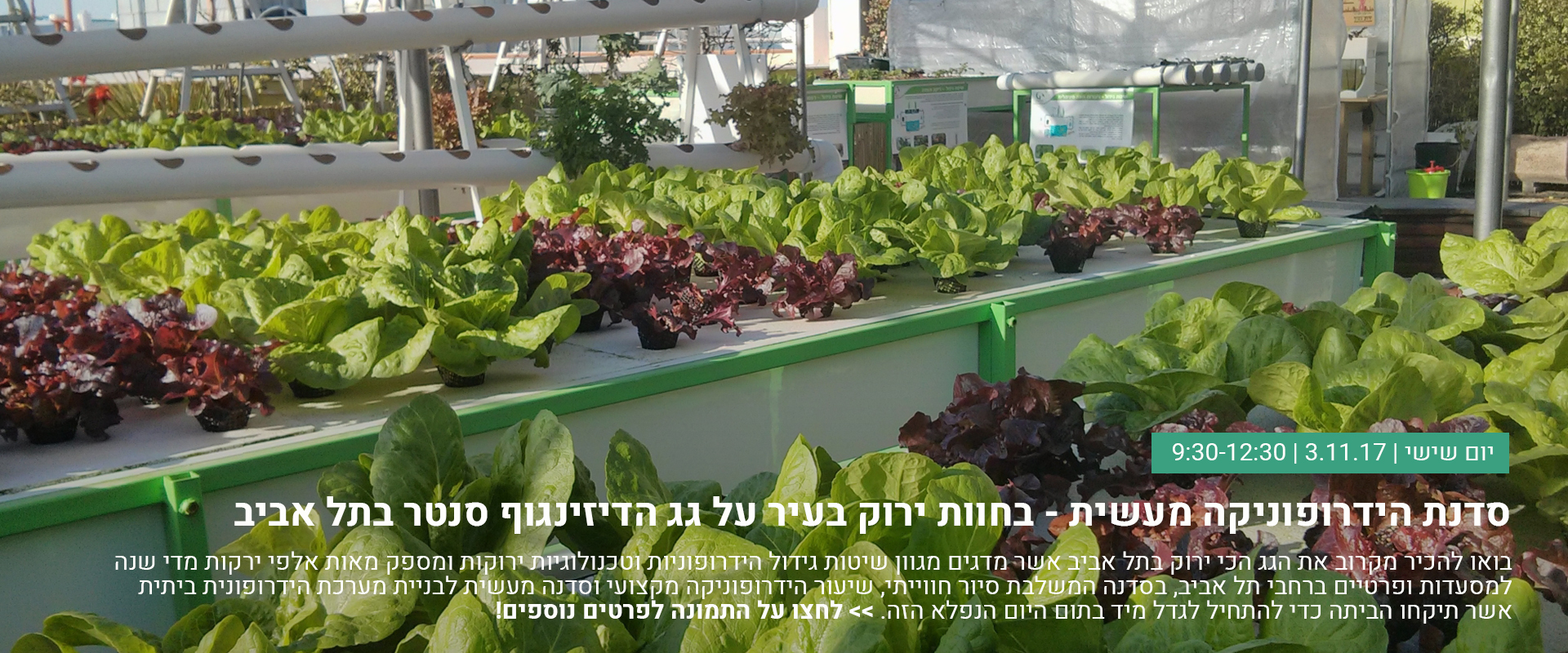 סדנה הידרופונית בתל אביב על גג הדיזינגוף סנטר