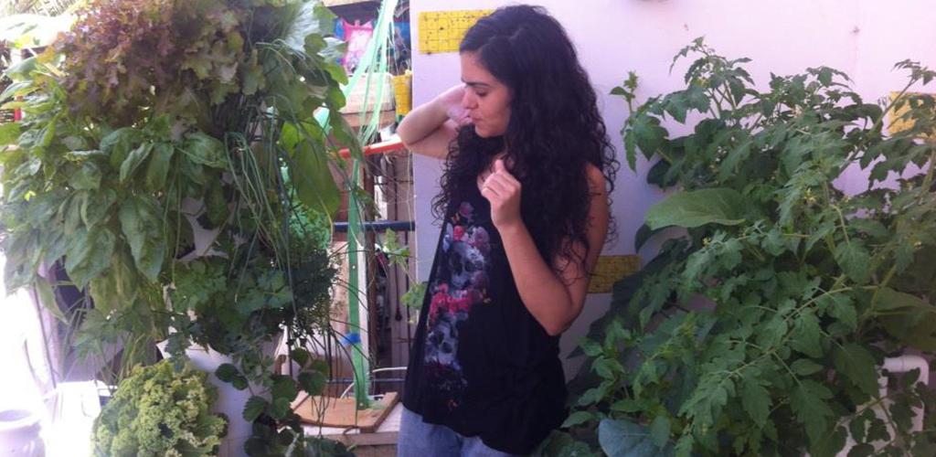 גידול בהידרופוניקה במרפסת הבית