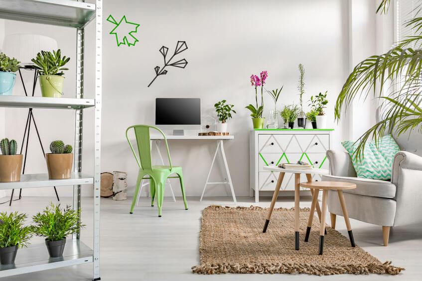 כתבה על צמחי בית עם צרכים מינימאלים
