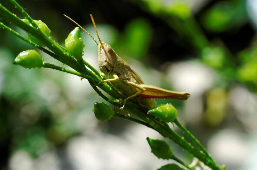 הדברה אורגנית טבעית למניעה והשמדה של חרקים ומזיקים בגינה