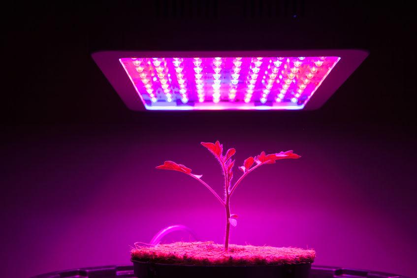 מנורת לד לגידול הידרופוני