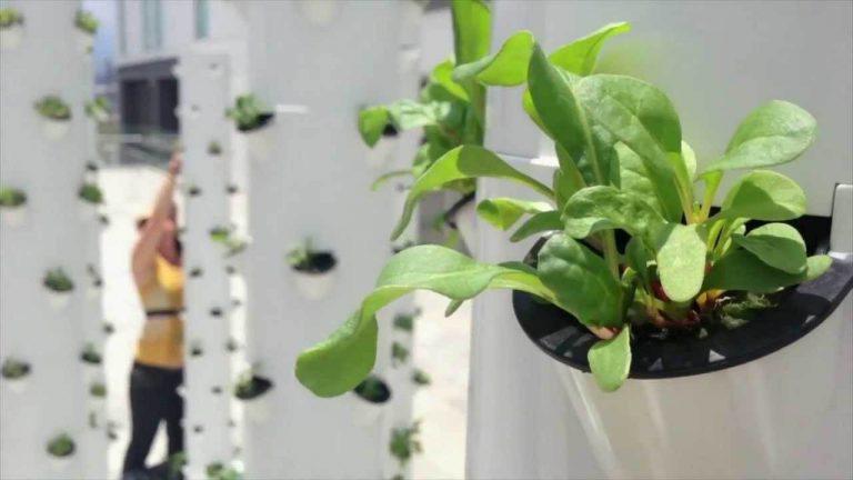 ערכות הידרופוניות על גג מסעדה בניו יורק מגדלות תוצרת לסועדים | עתיד ירוק