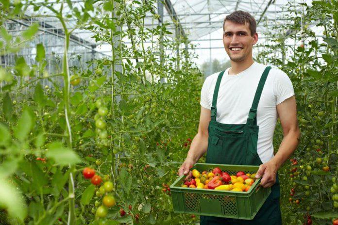 עסקים הידרופונים ירוקים חקלאים גידול הידרופוני