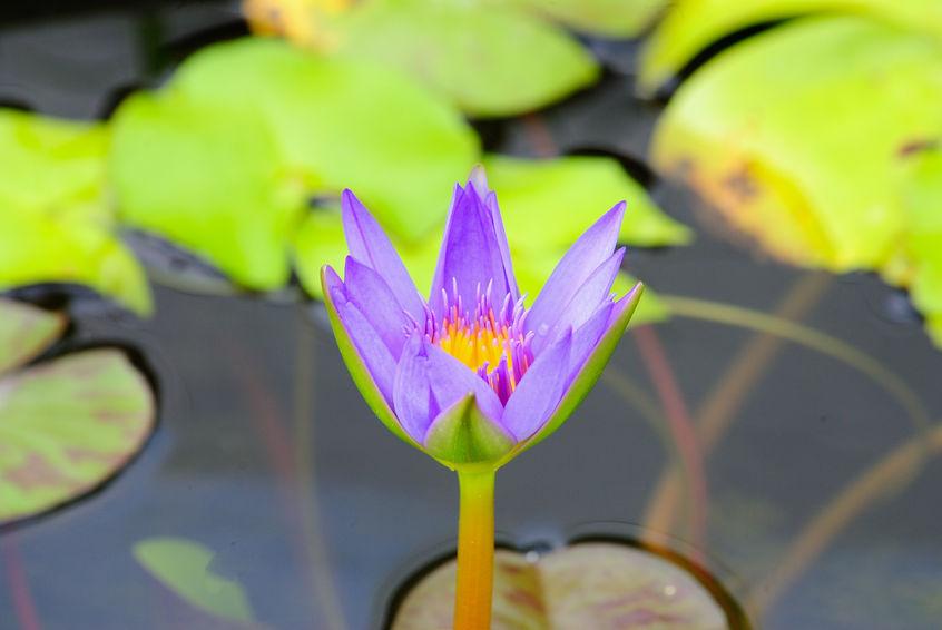 גיאומטריה מקודשת בטבע, ספירלות, חתך הזהב, פרחים וצמחים