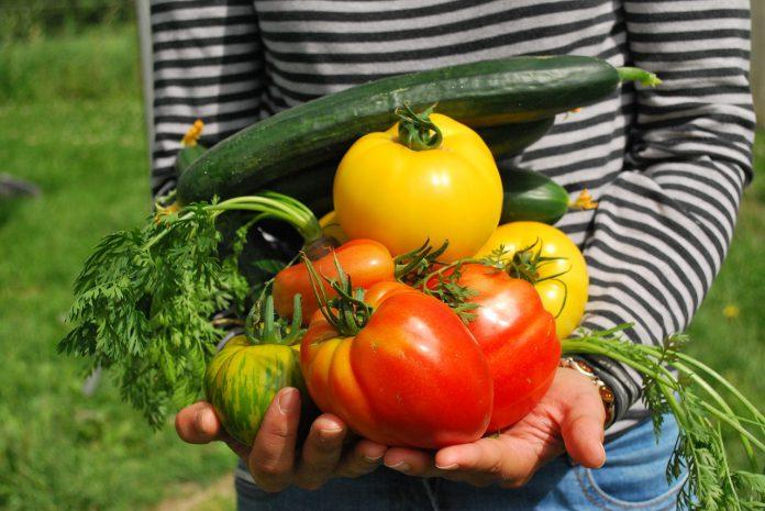 גינת ירקות ביתית מדריך למתחילים