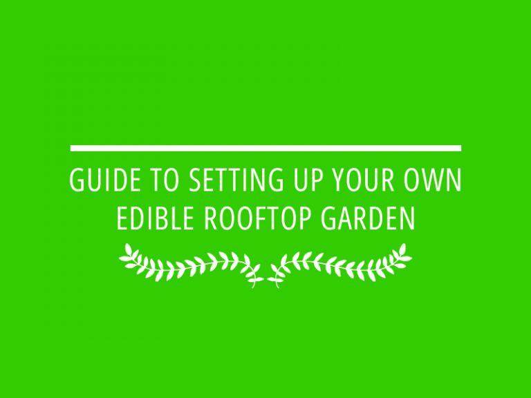 מדריך להקמת גינת ירק על הגג