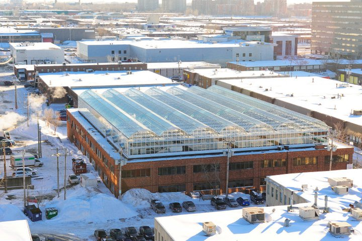 Lufa Farms חממות גידול הידרופוניות במונטריאול, קנדה 3