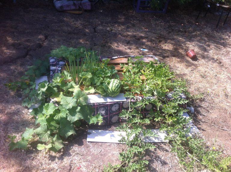 גינה חדשה בחצי שעה: הקמת גינת ירק במשטח ב-4 צעדים פשוטים