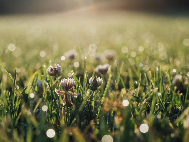 הסתיו מגיע: טיפים להכנת הגינה וירקות שאפשר לשתול