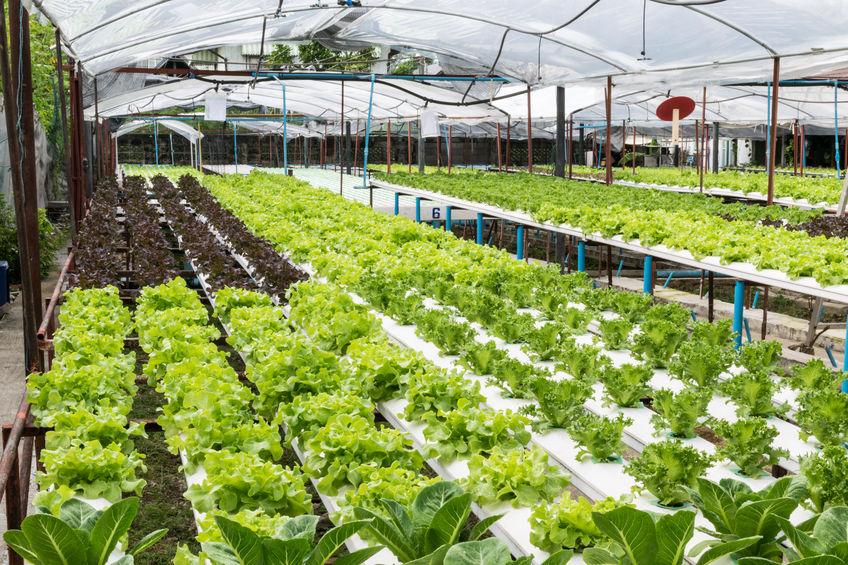 חממה הידרופונית על גג - חקלאות עירונית