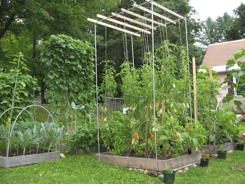 גידול עגבניות מזרע