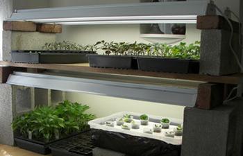 מנורות גידול לצמחים