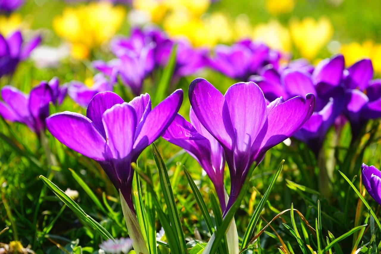 מדריך זריעה ושתילה בעונת האביב