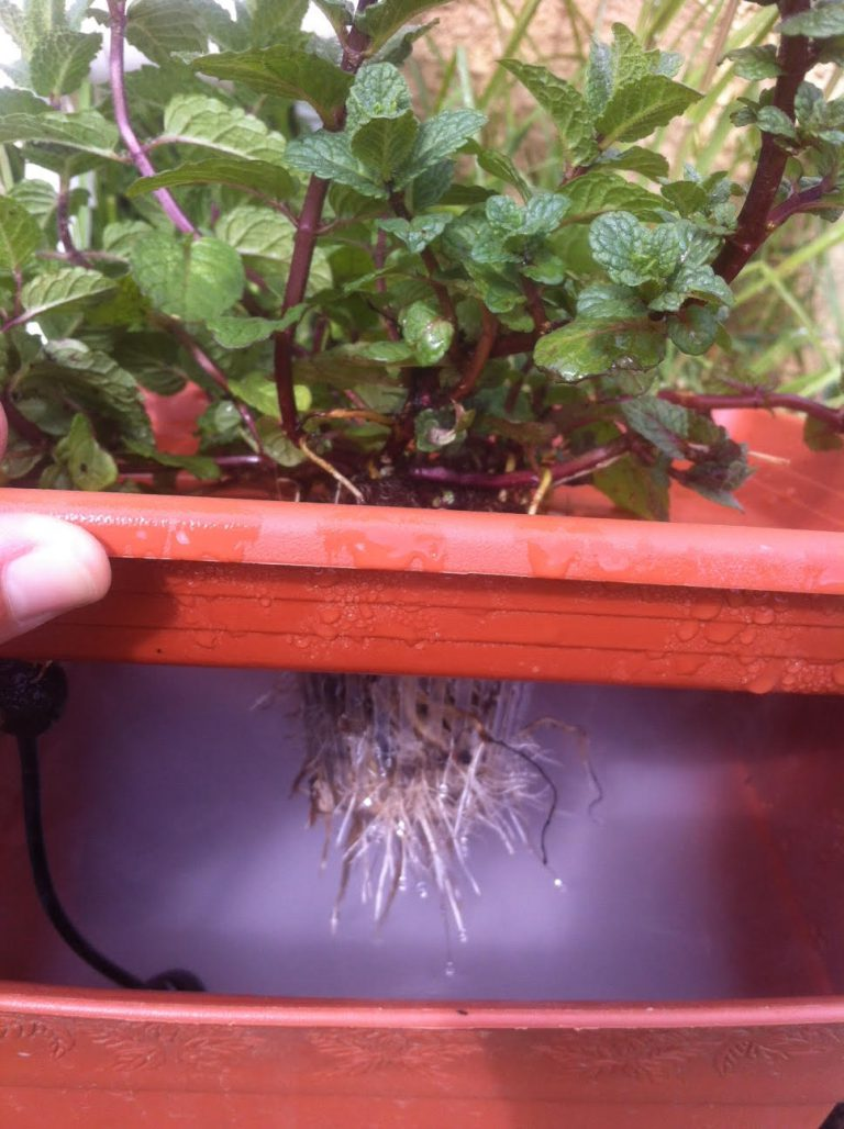 לגדל בערפל (פוגפוניקה): בנו בעצמכם עציץ הידרופוני מתקדם מהר ובזול
