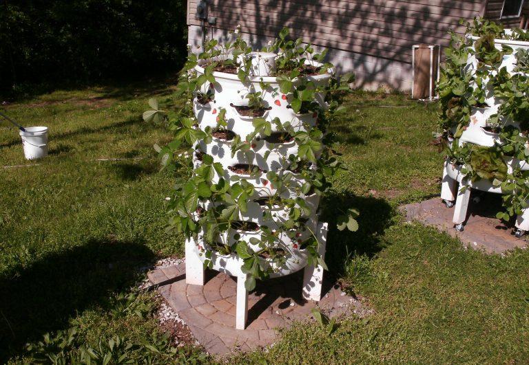 עשה זאת בעצמך: חבית לגידול אנכי של עד 70 צמחים בגינה ביתית