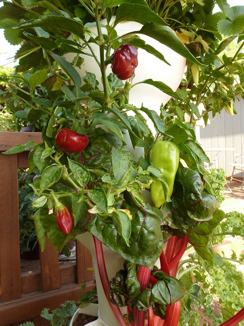 גינת מגדל הידרופונית גינת ירק ביתית