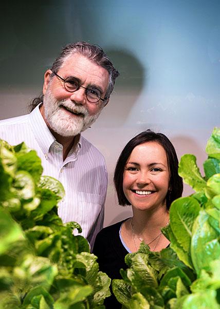 גידול מזון חקלאות עירונית מערכת הידרופונית מיקרוסוםט