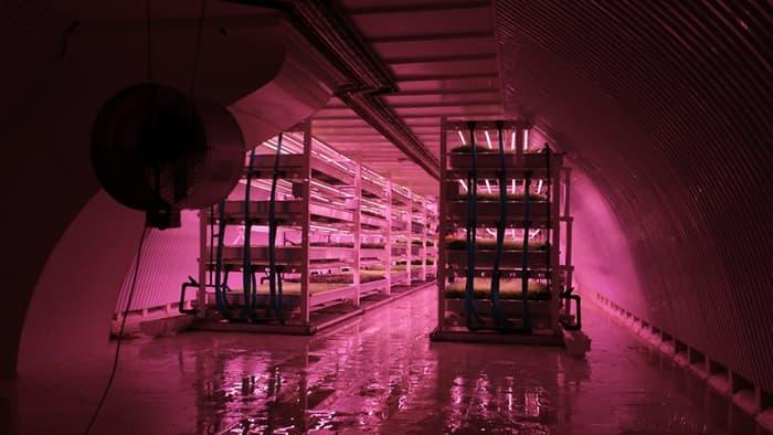 growing-underground3