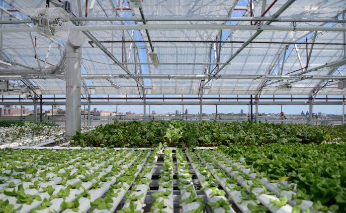 לגדל בתוך העיר ירקות הידרופוניקה