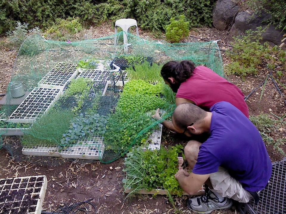 עידן פלאות מגדלים ירקות בבית