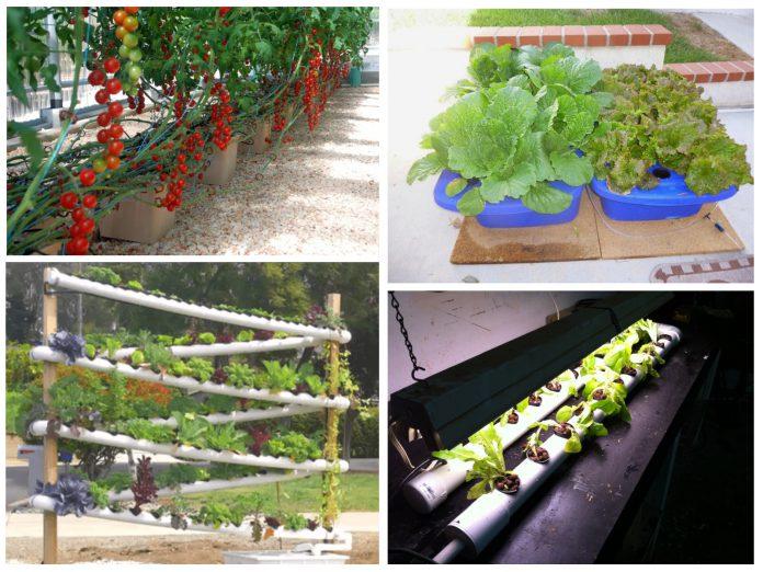גידול הידרופוני ביתי במערכות הידרופוניות מתקדמות